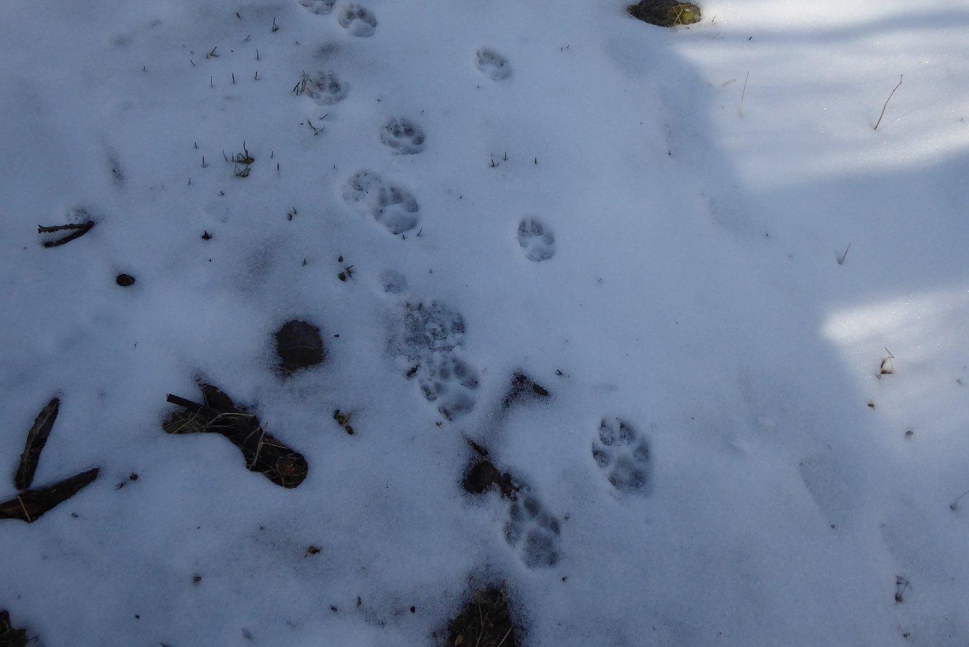 Cani o lupi????