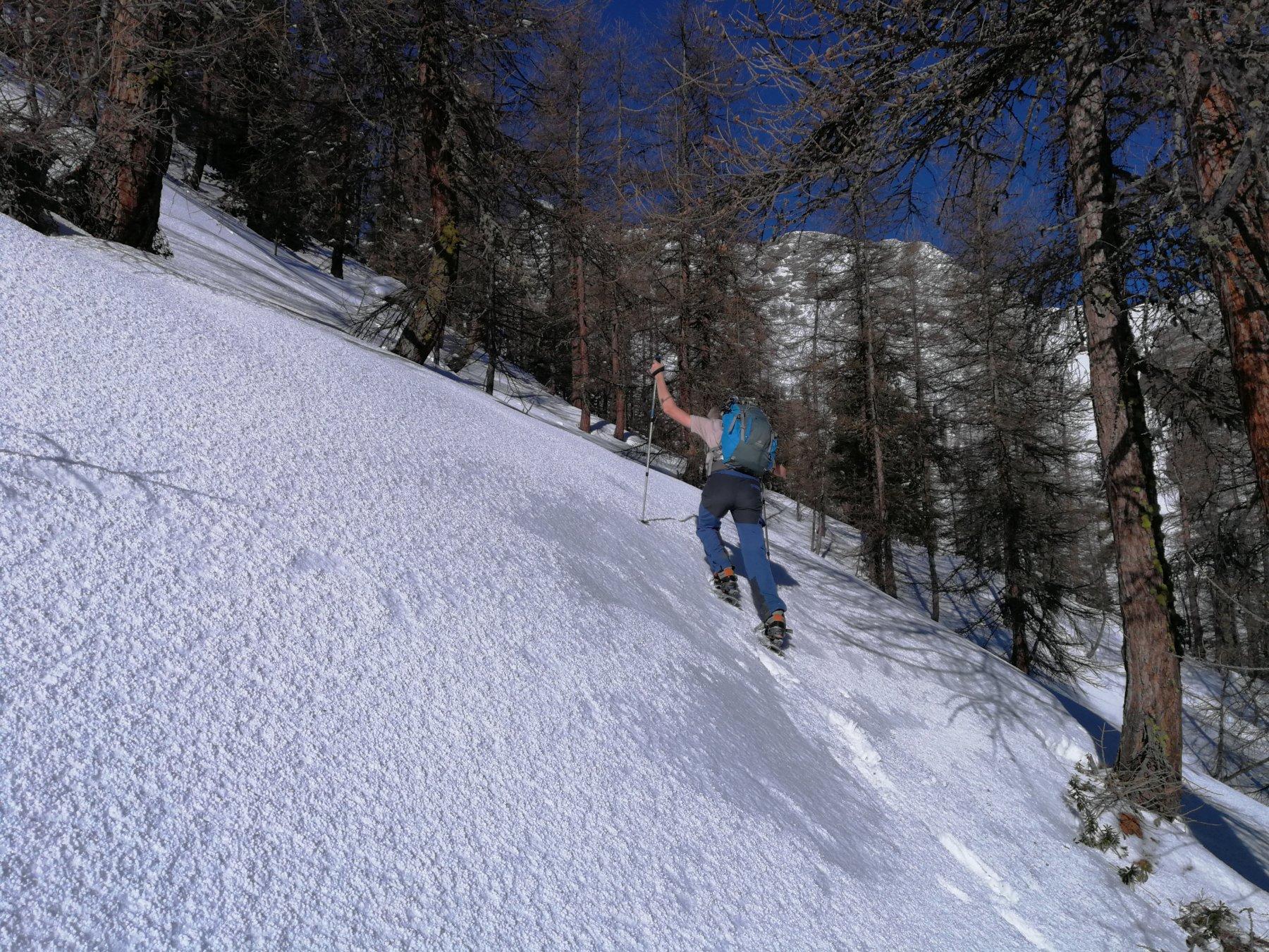In salita fra i larici, in un bel tratto di neve compatta (foto E. Lana).
