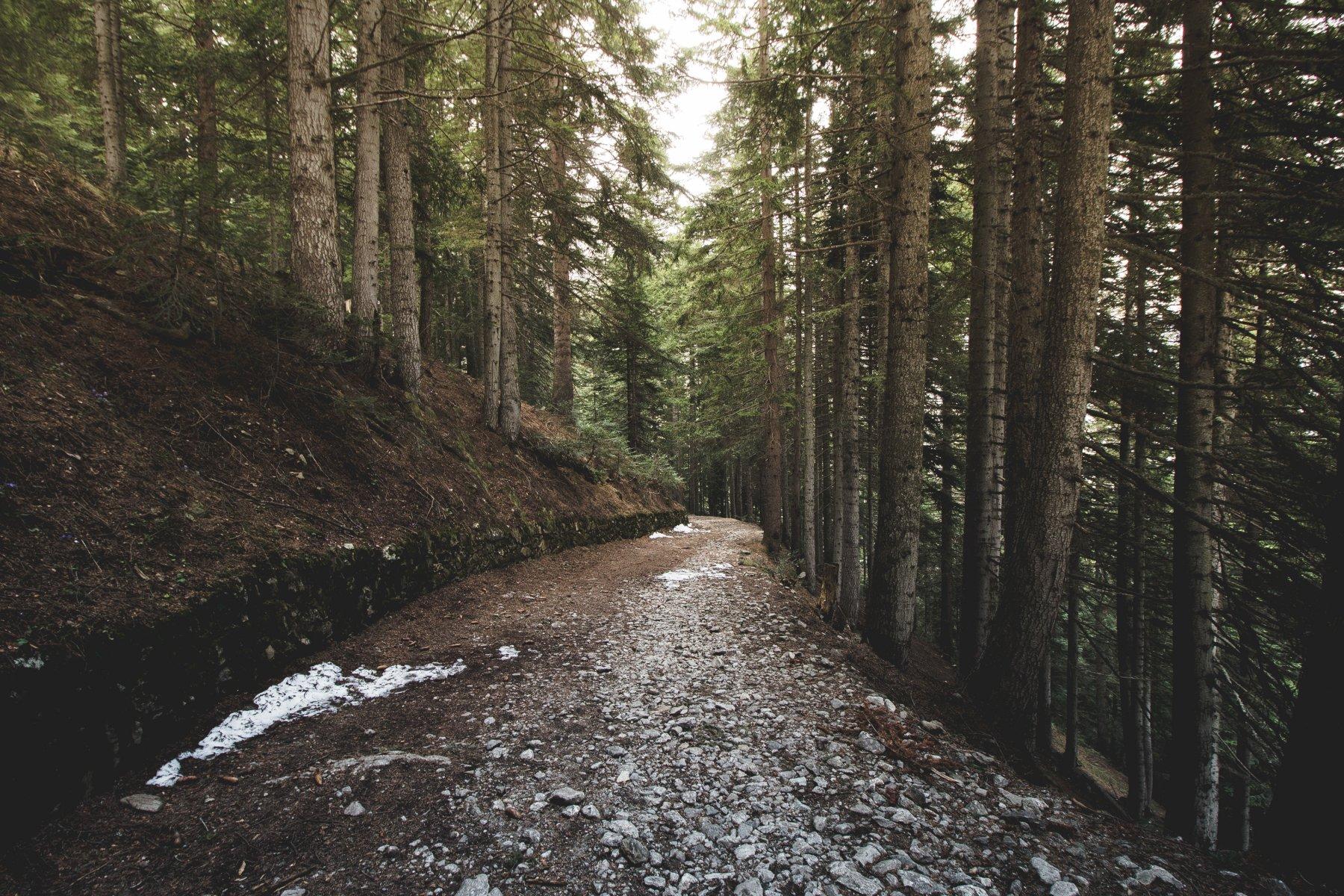 Il tratto pulito nel bosco