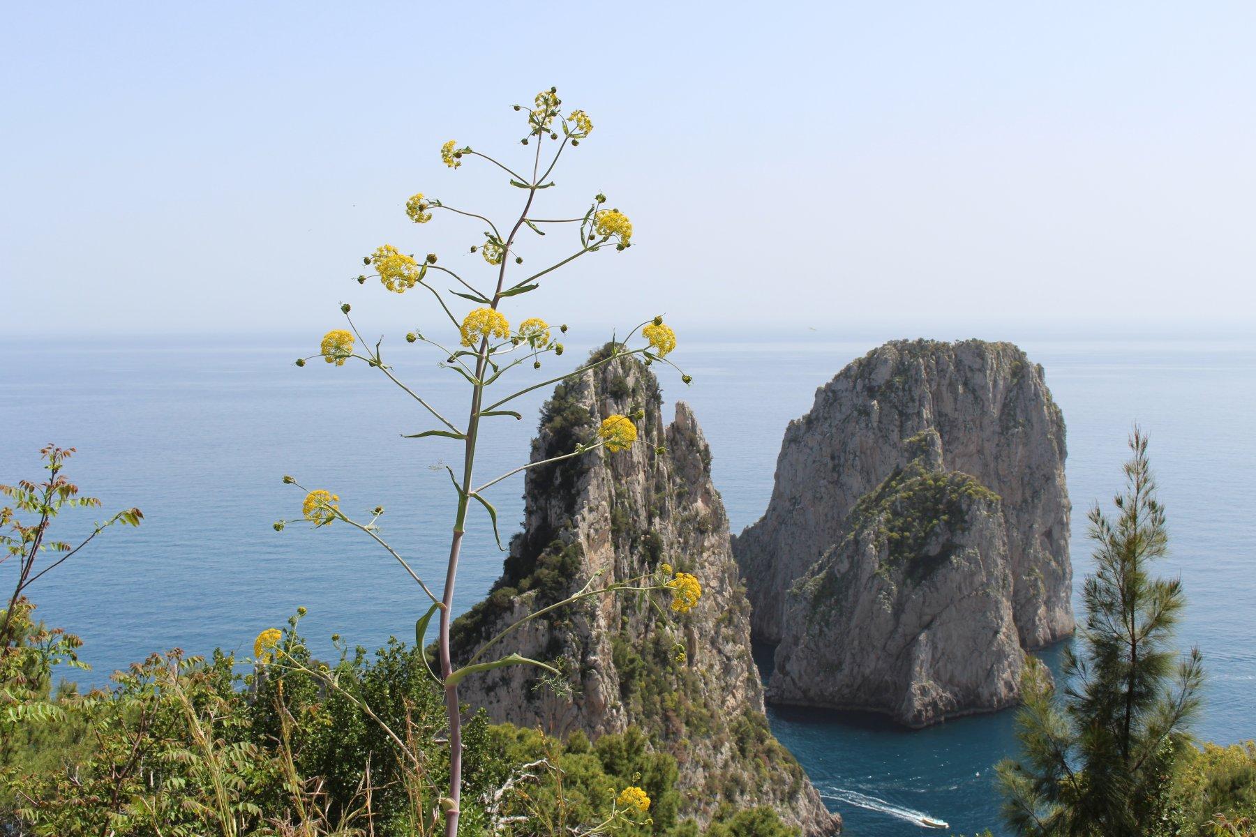 Capri (isola) -Villa Jovis, Arco naturale, Faraglioni 2019-04-25