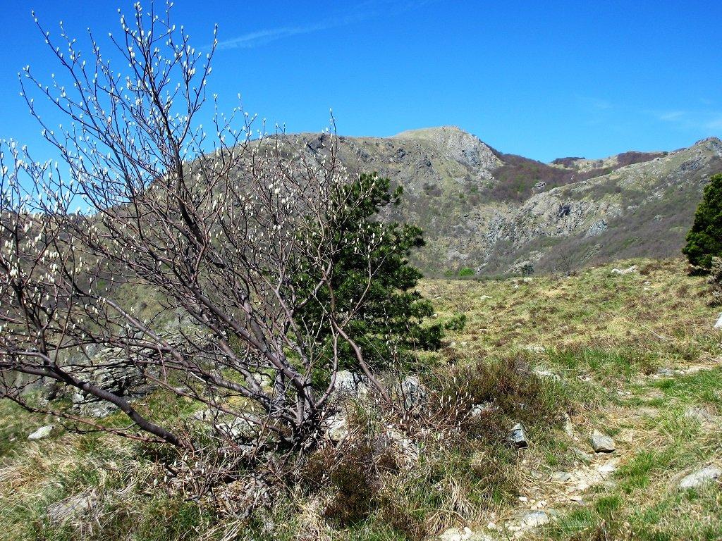 Monte Sciguelo