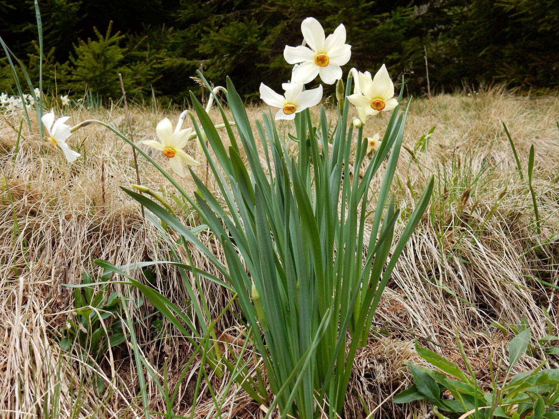 Flora del posto,anche questo fa parte dell'escursione.