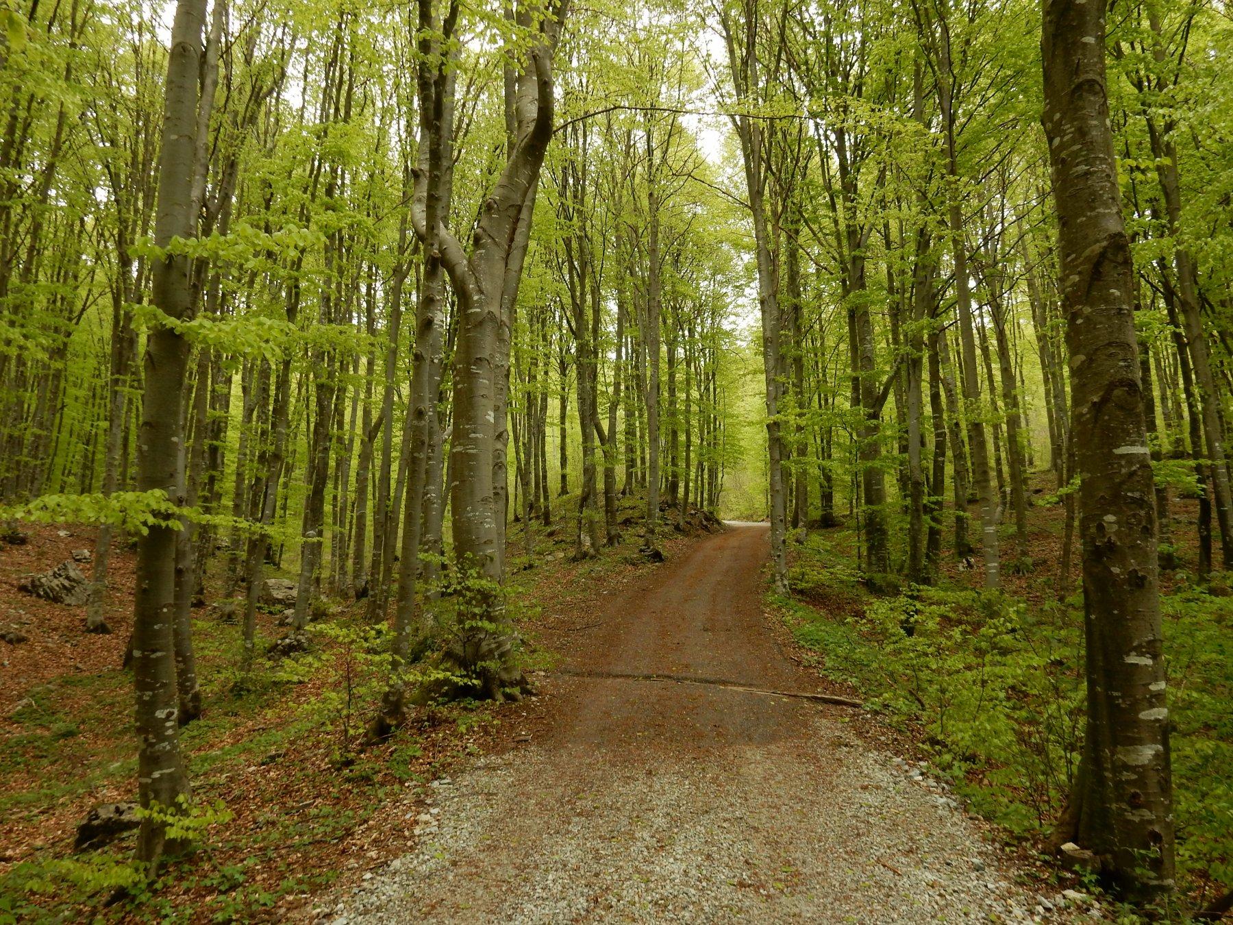 Parte iniziale nel bosco di faggi.