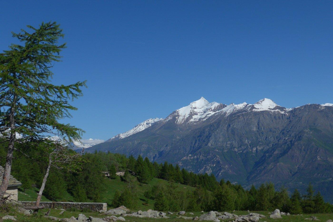 Il Rocciamelone dall'Alpe Fumavecchia