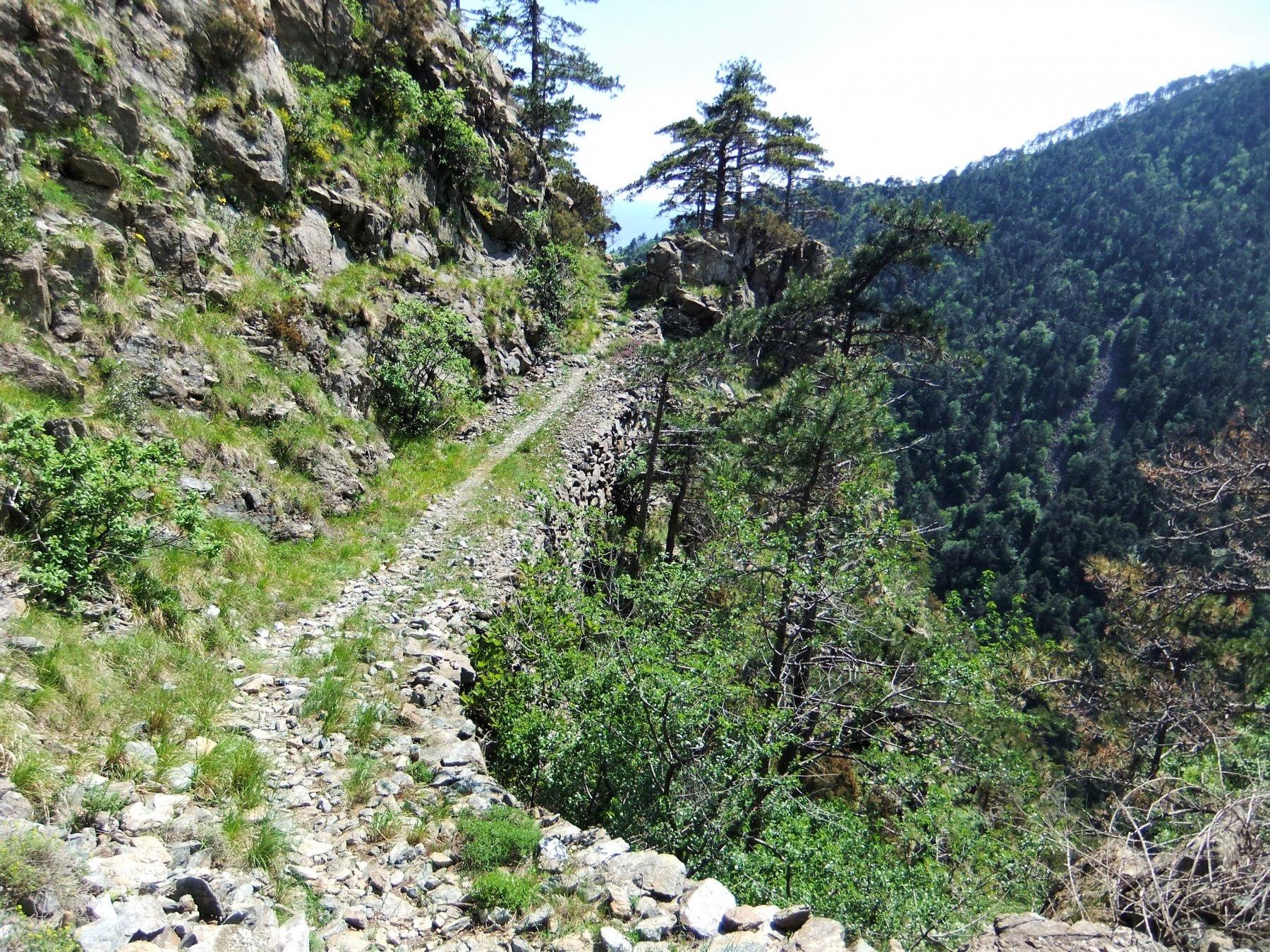 Sentiero triangolo rosso verso Arenzano