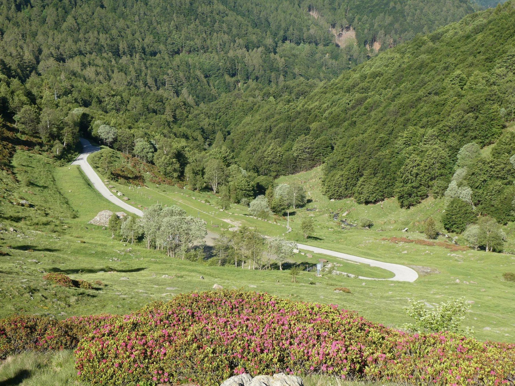 ecco la strada asfaltata che termina ai 1440mt dell'Alpe di Serdena