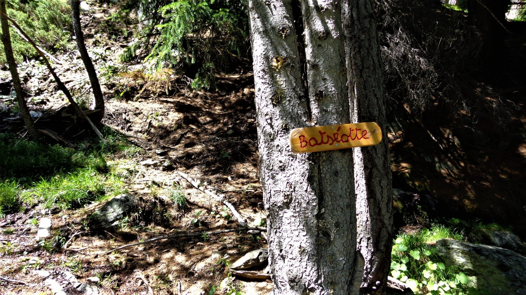 Cartello all'albero a quota 1945m