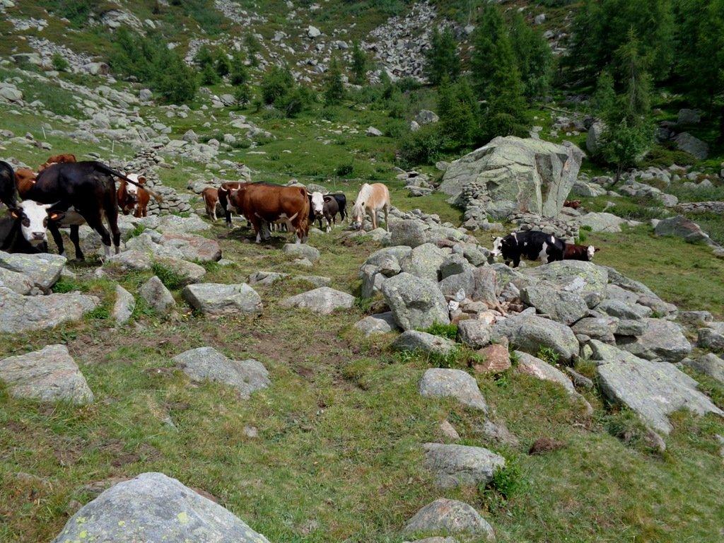 All'Alpe Rasca Inferiore