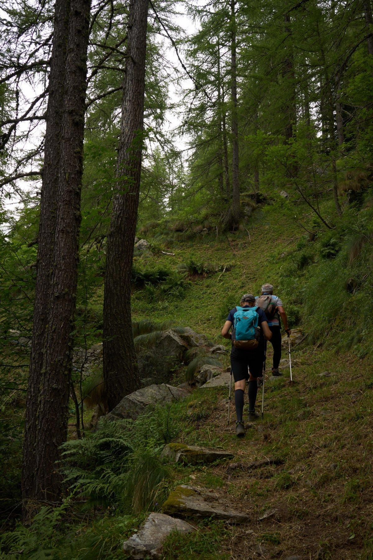 La prima parte del sentiero nel bosco