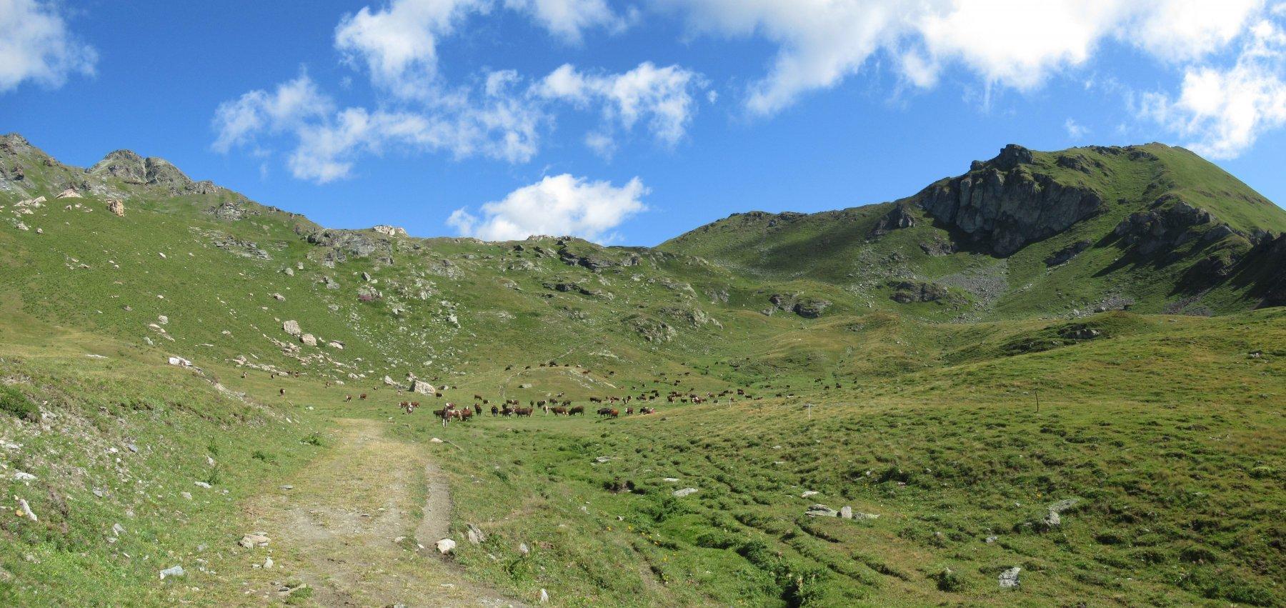 Mucche al pascolo e sulla destra la ns meta