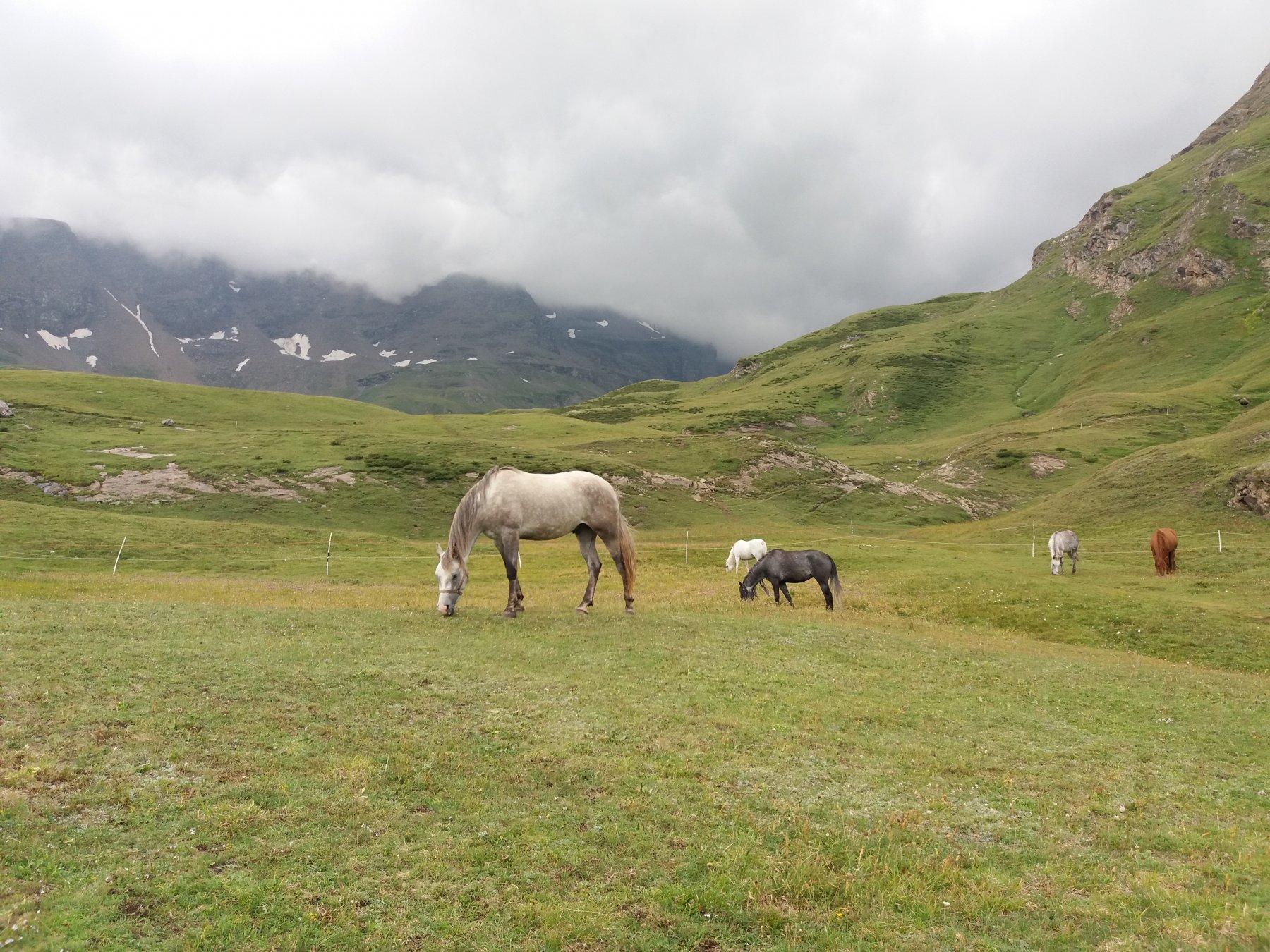 Nuvole nere e placidi cavalli sopra il rifugio Dondena