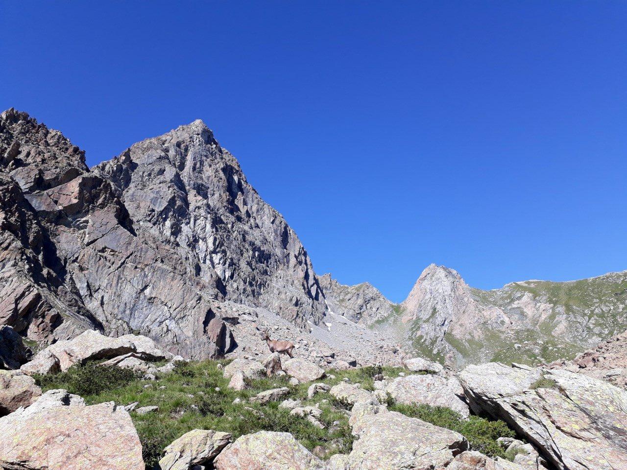 Mondrone (Uja di) Cresta dell'Ometto 2019-08-18