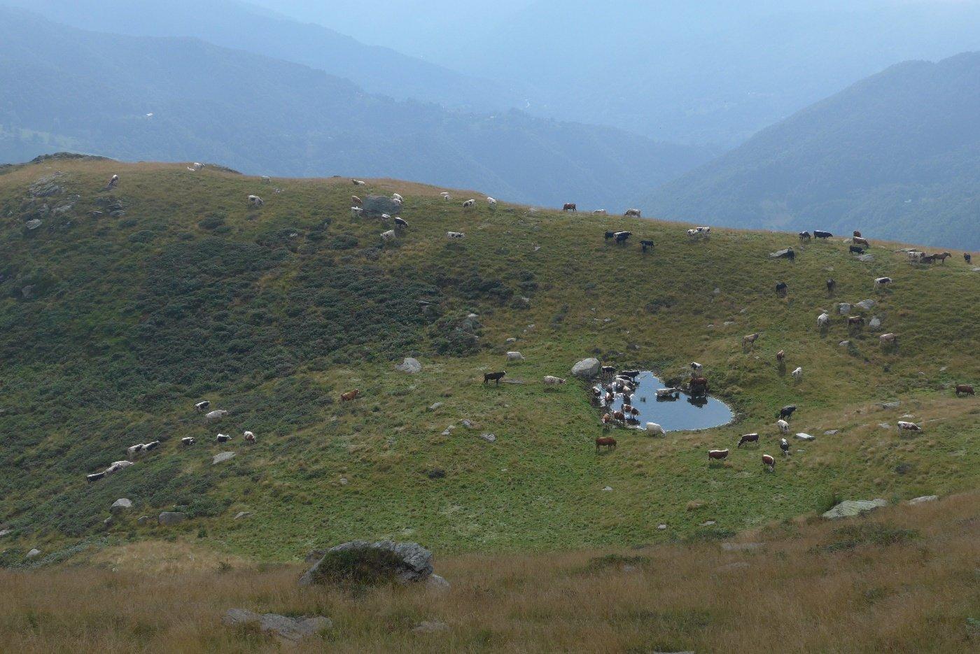 Viana (Lago e Colle di) dall'Alpe Bianca 2019-08-21
