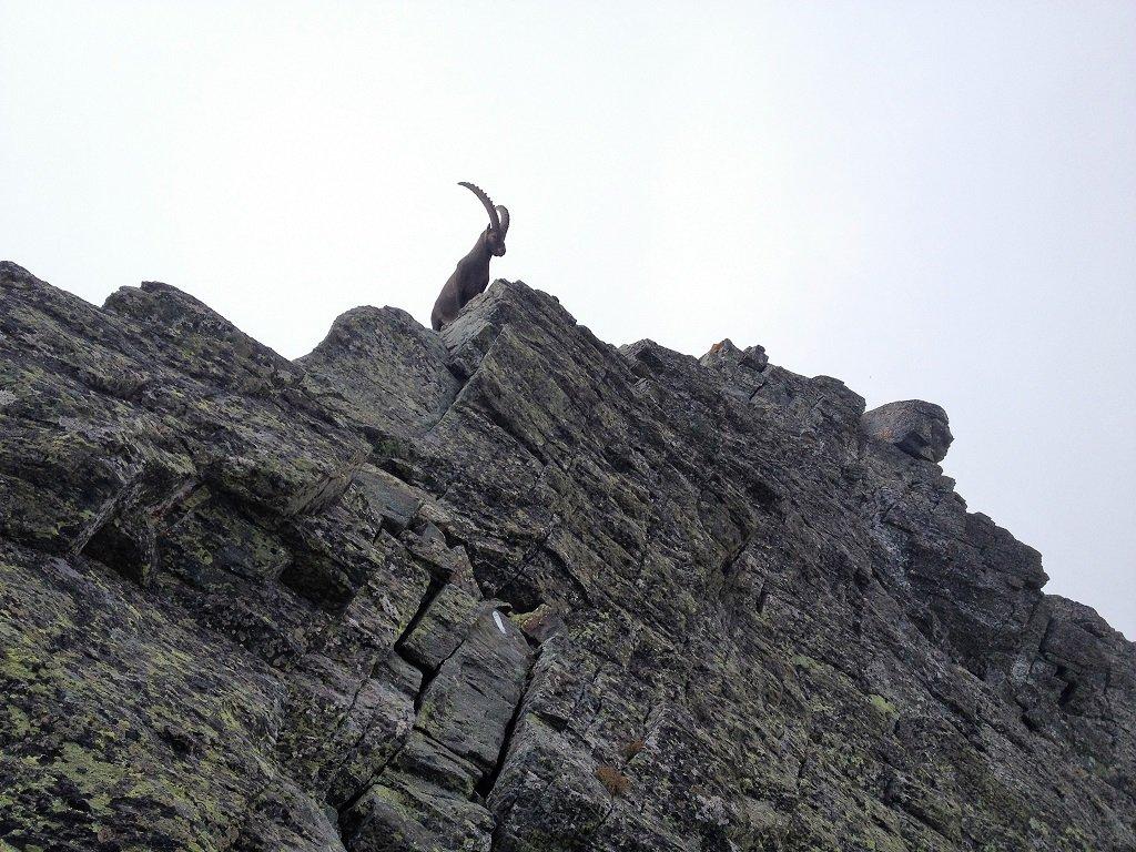 IL guardiano sulla cima Bucie