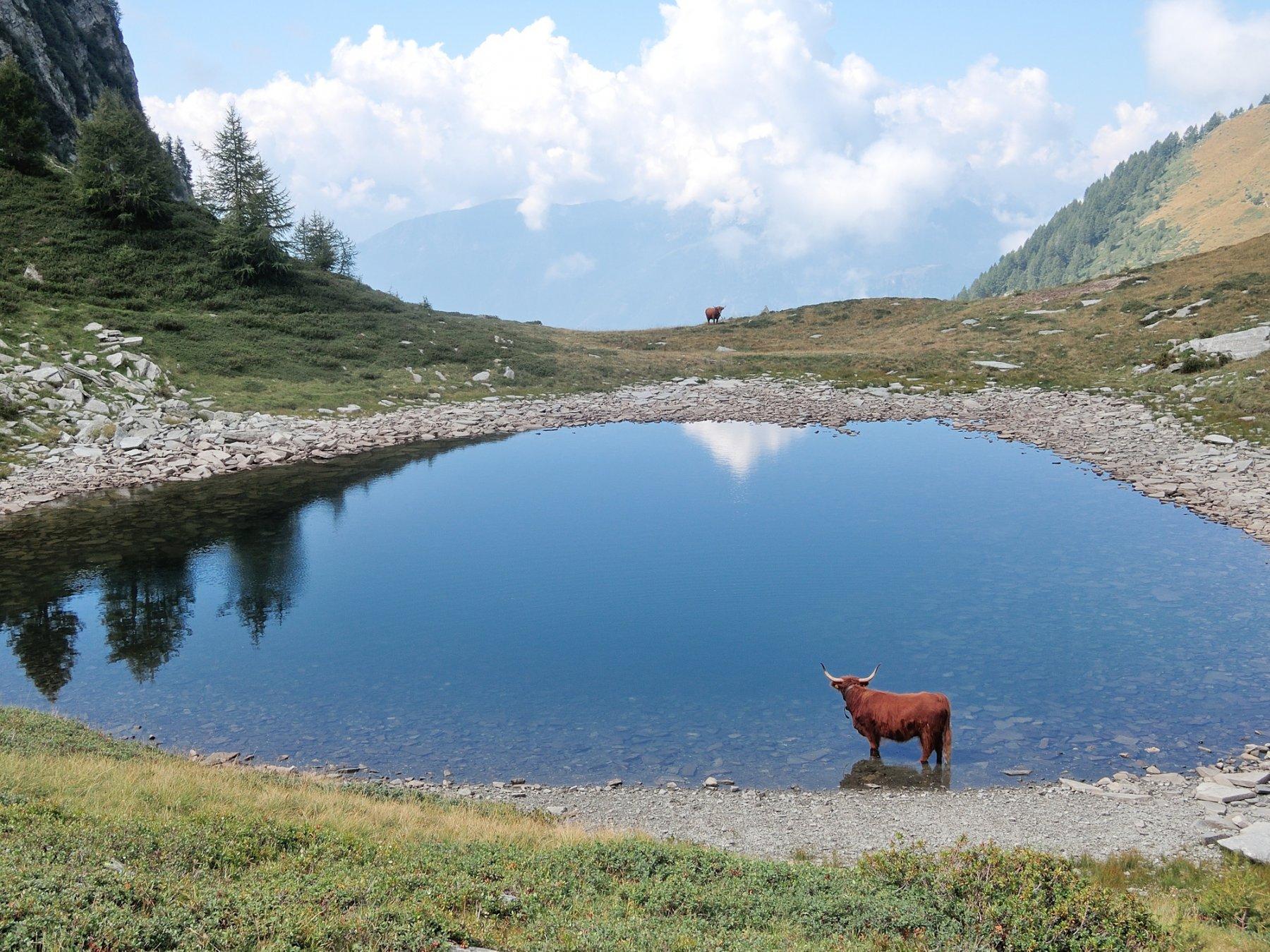 Passo di Larecchio e Lago di Forgnone