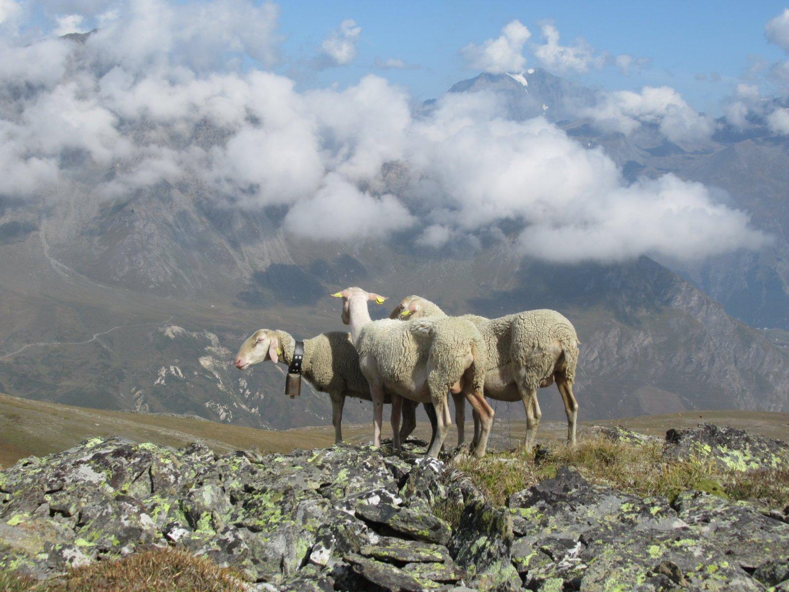 in cima alla Pointe Droset, NON SOLO cielo... a pecorelle!!!