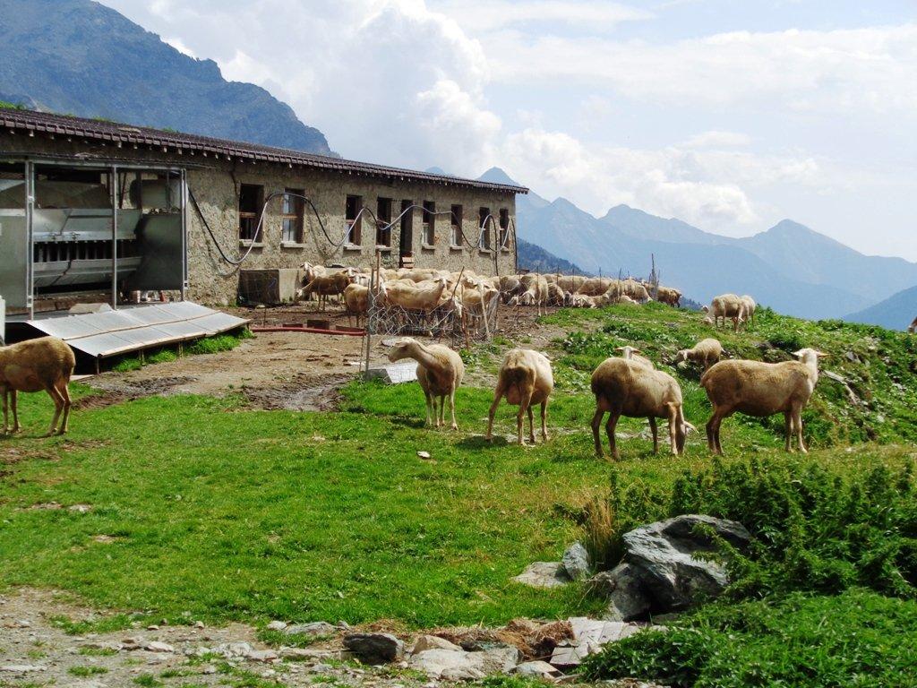 Alpe Vascoccia