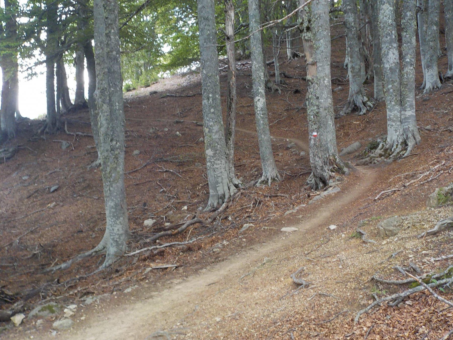 GR20 nel bosco al ritorno