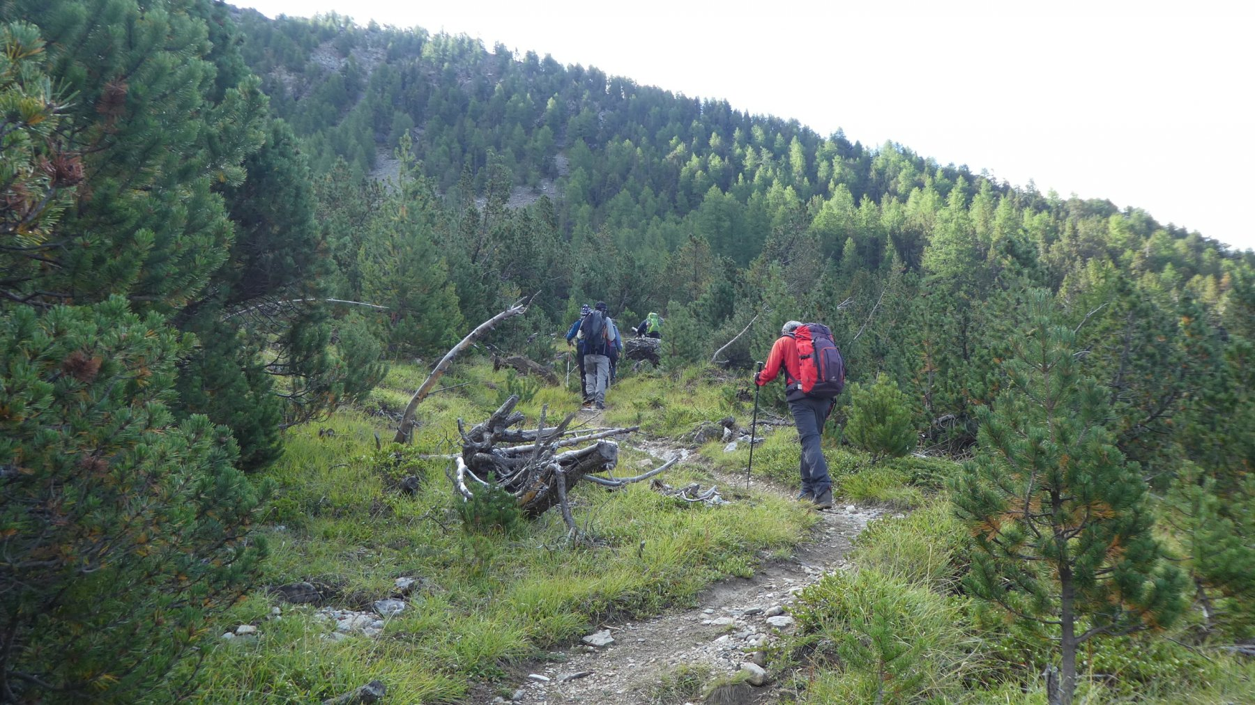 salendo nel bosco (Vallone di Liconi) verso le miniere di Colonna