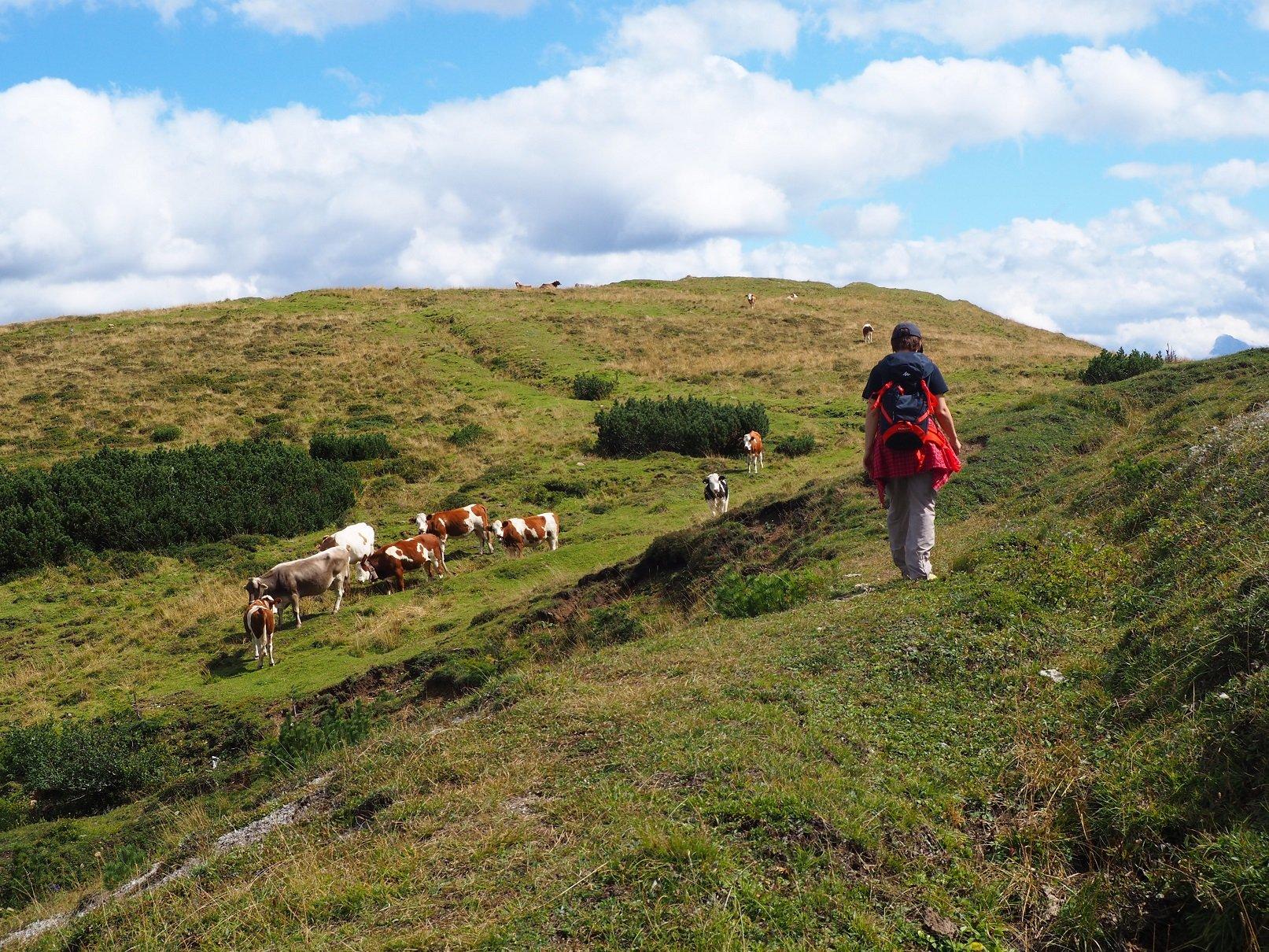 Colesei (Cima dei) dal Passo di Monte Croce Comelico 2019-09-10