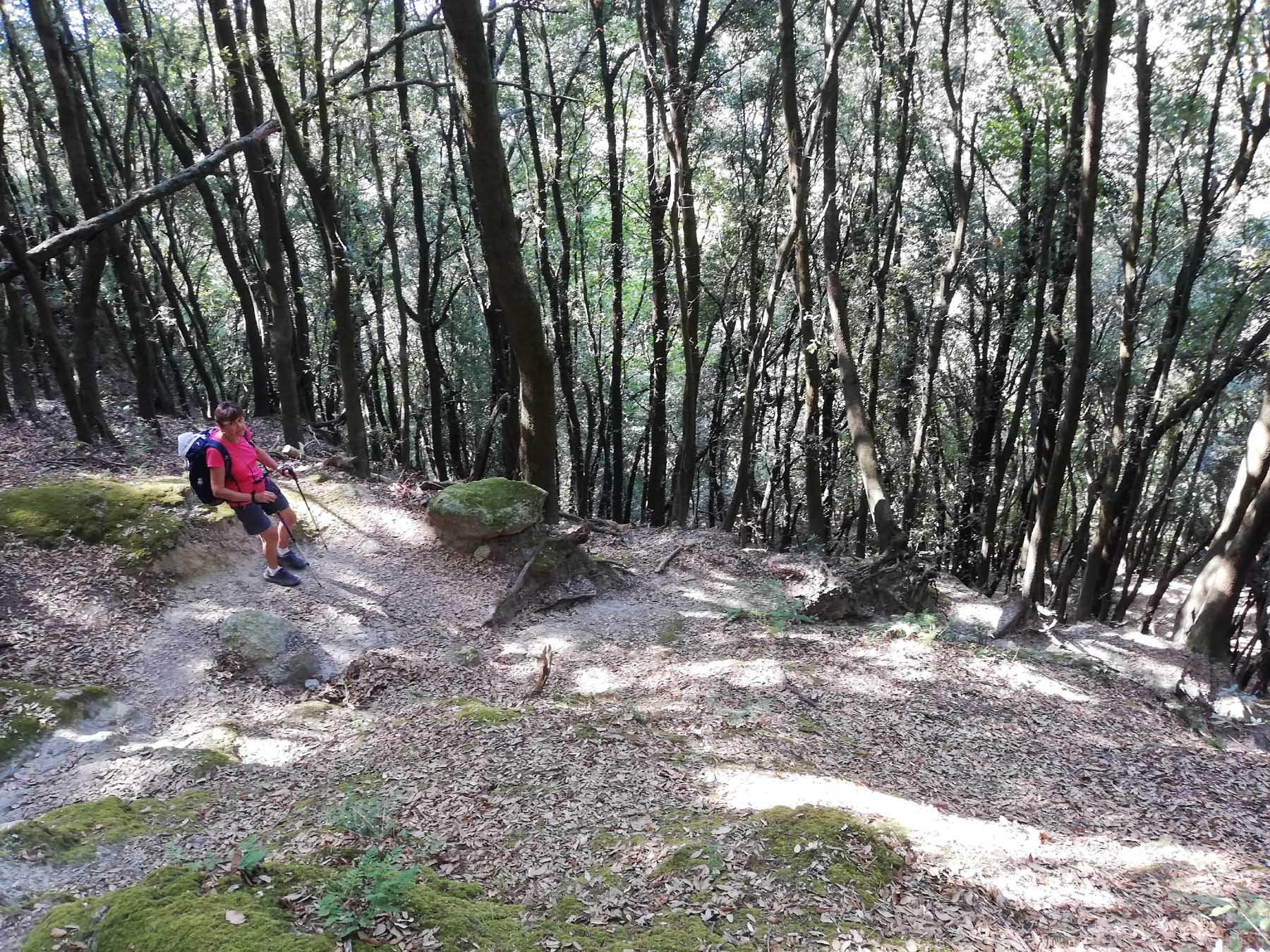 Nel bosco della Falanga