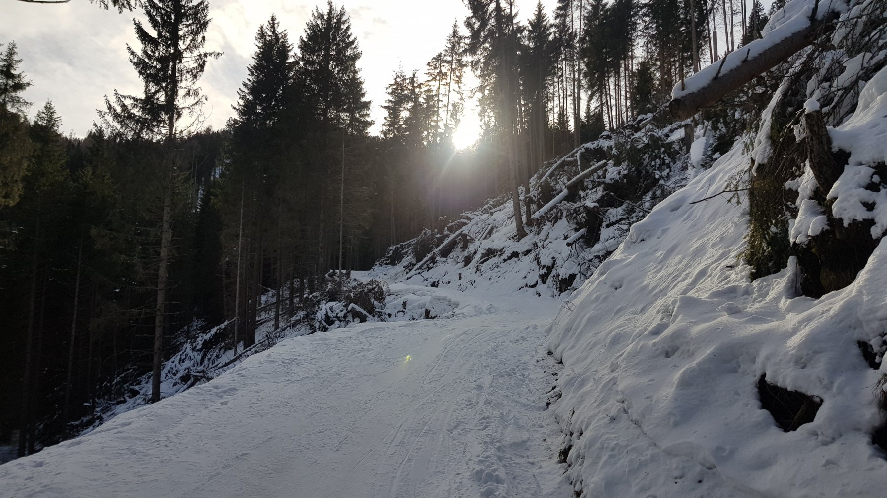 La parte iniziale della strada nel bosco
