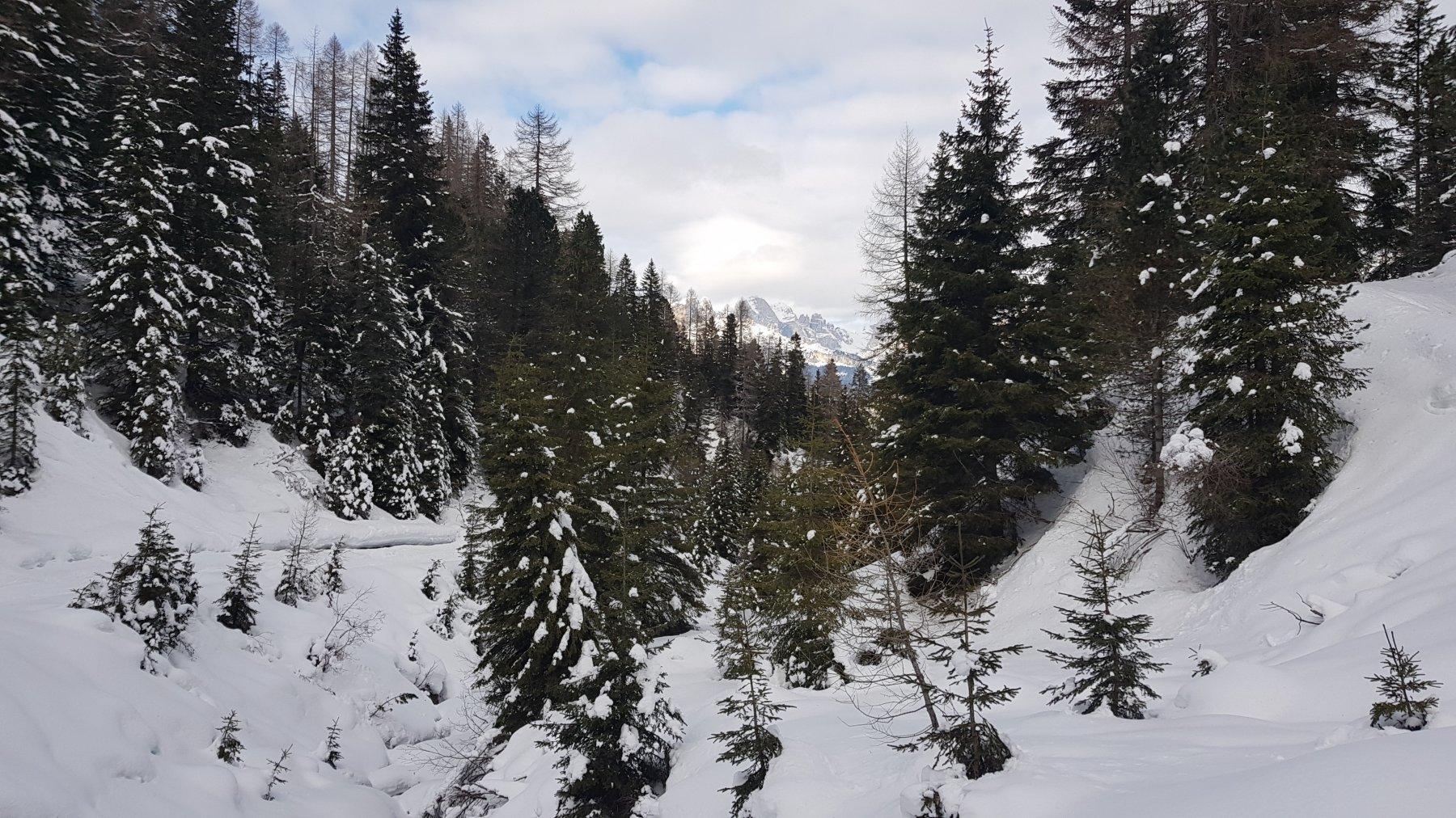 La parte finale della strada nel bosco