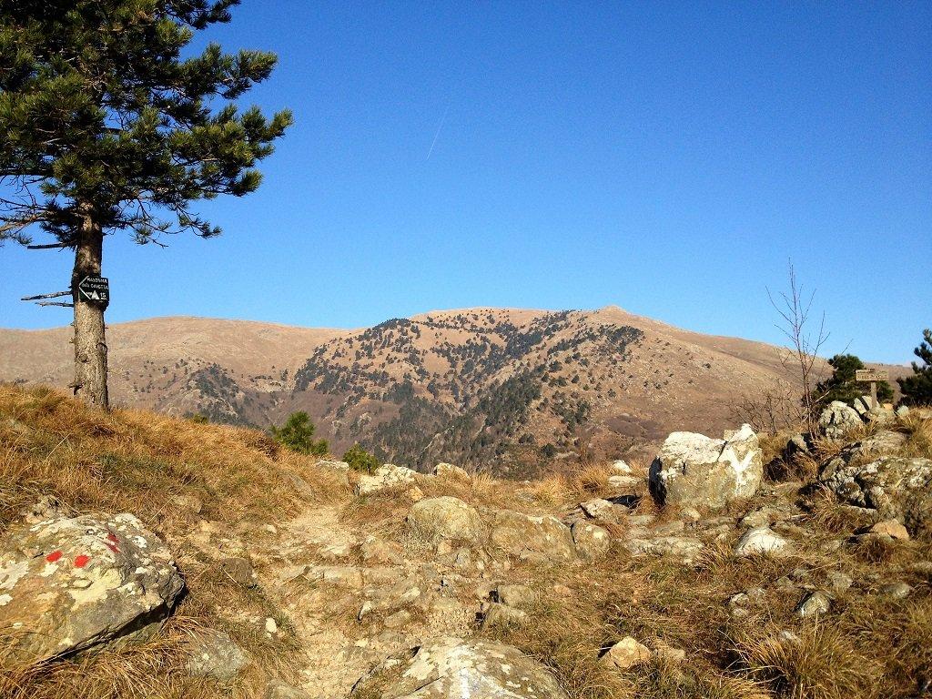 Dal pino le pendici di Vaccaria e Reixa, dal passo Gavetta