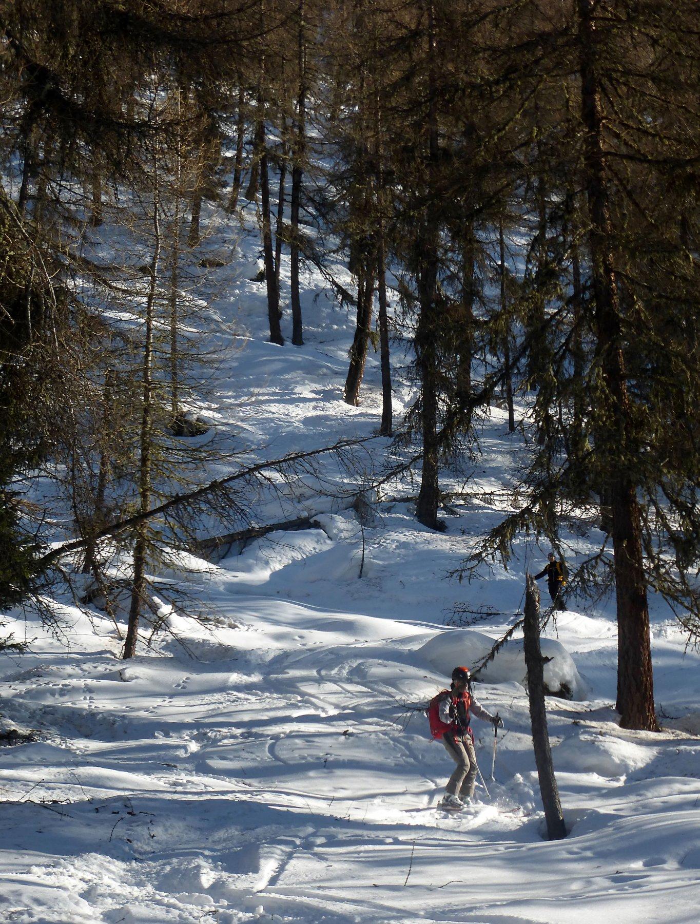 Il bosco bis