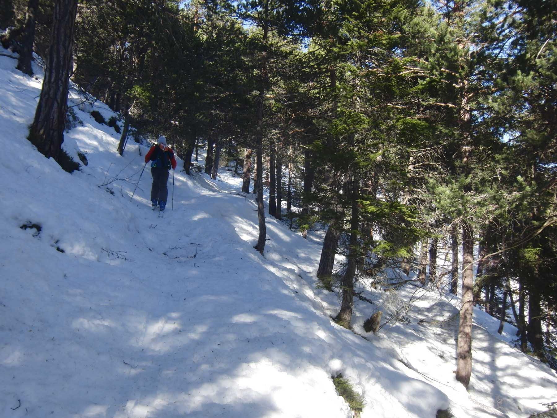 Sul sentiero alto nel bosco