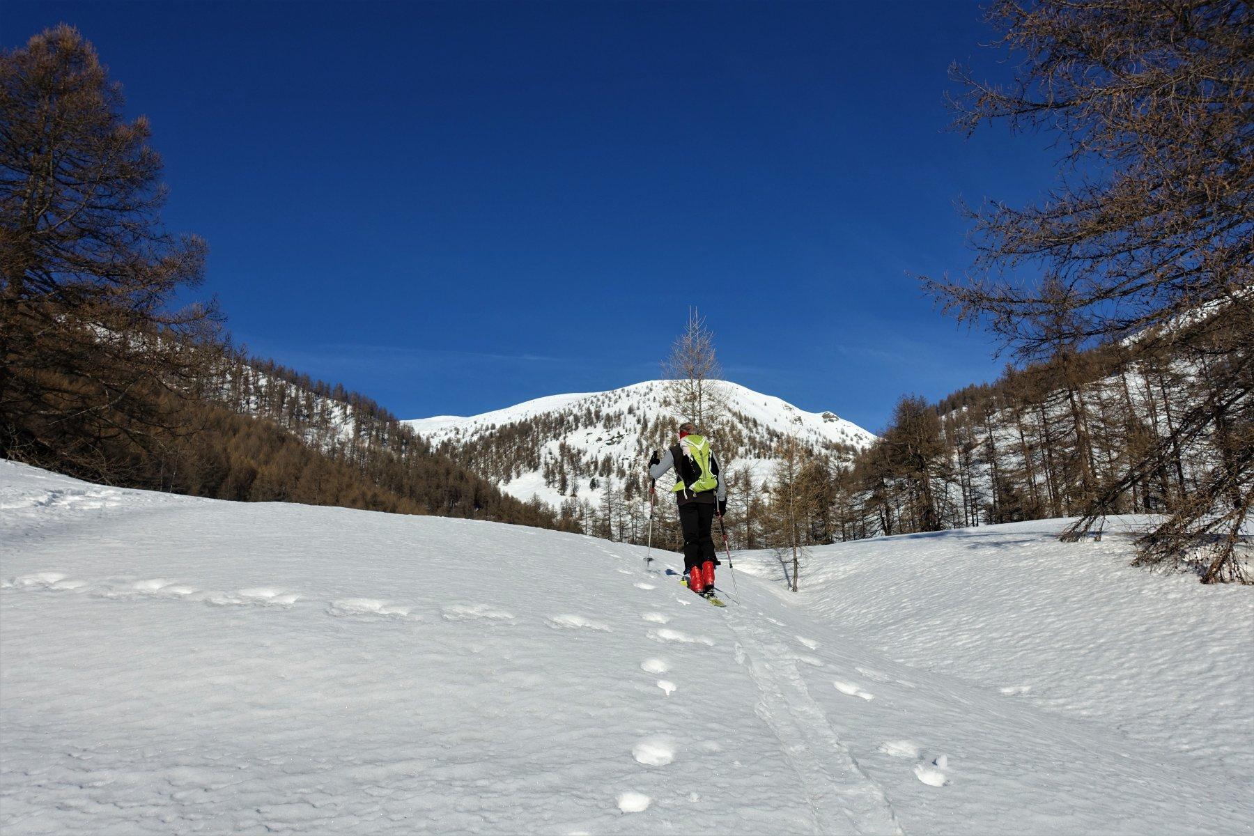 La radura a monte del Rif, con la confluenza fra i valloni di Costa Piana e Blegier sullo sfondo