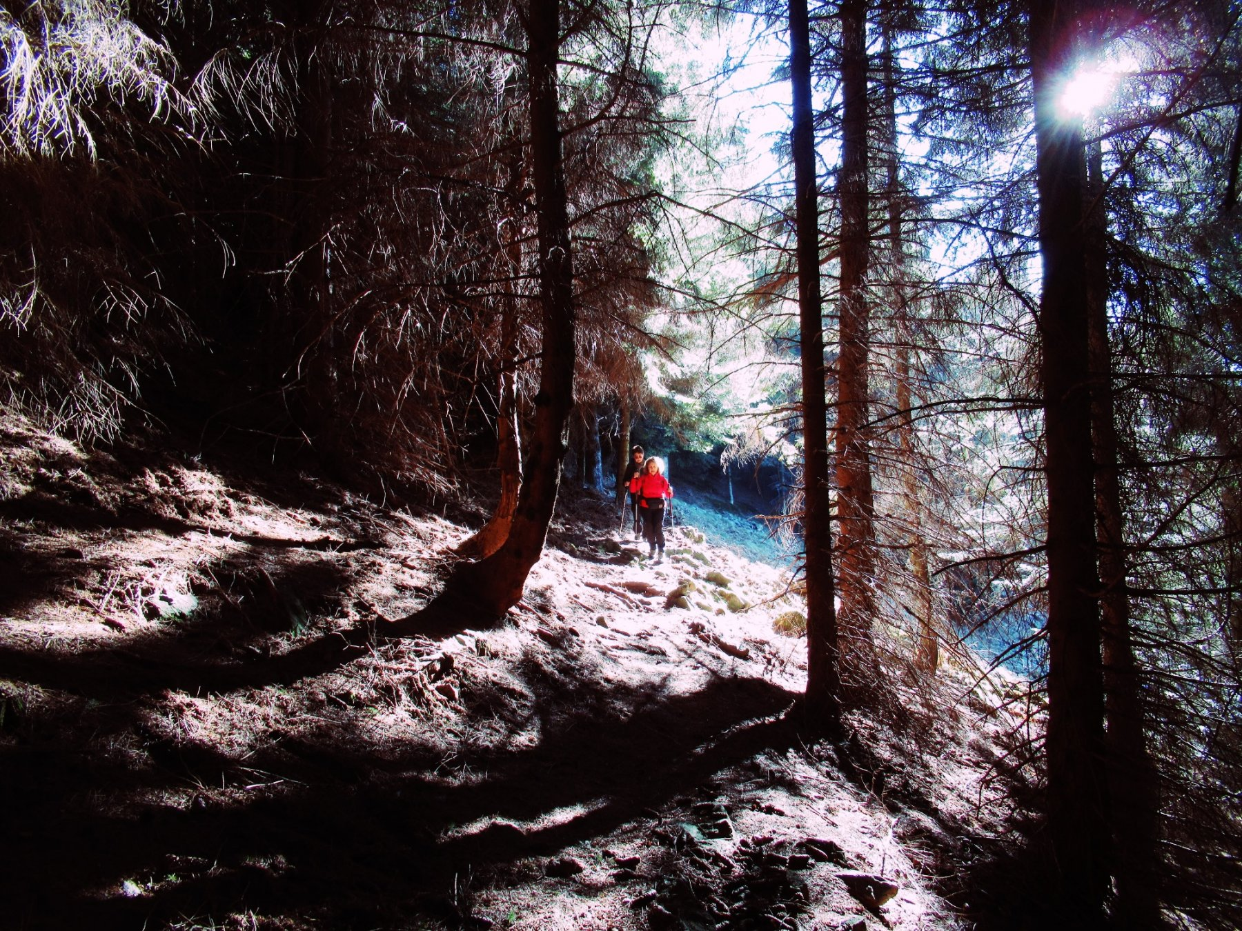 gioco di luci nel bosco