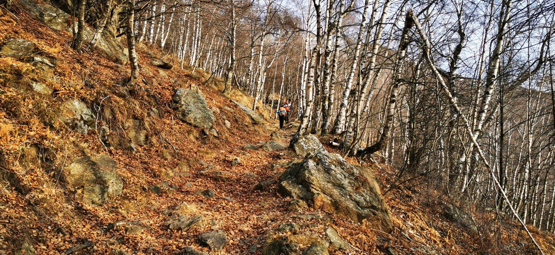 salendo nel bosco lungo il sentiero con segnavia 872 verso l'Alpe Pinalba