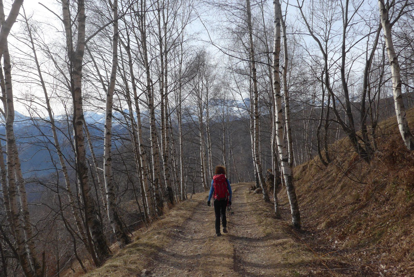 Scendendo nel  viale delle betulle