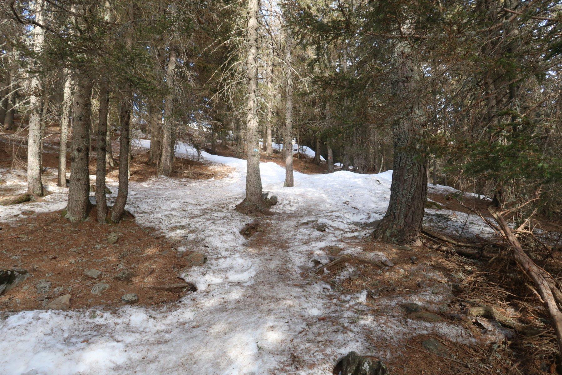 Sentiero sotto Alpe Piazza in condizioni preoccupanti