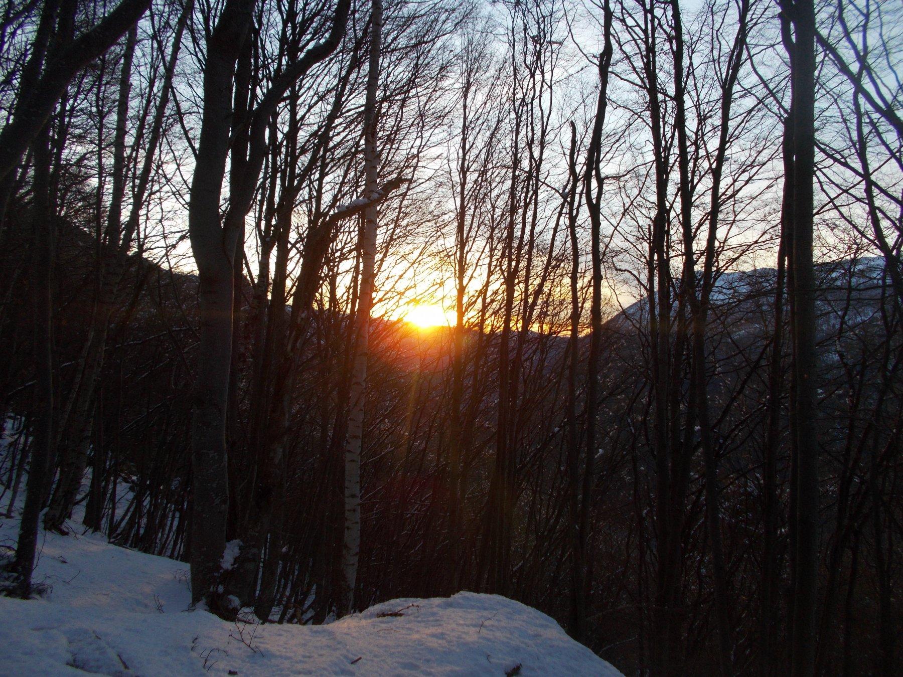 primi raggi di sole nel bosco..