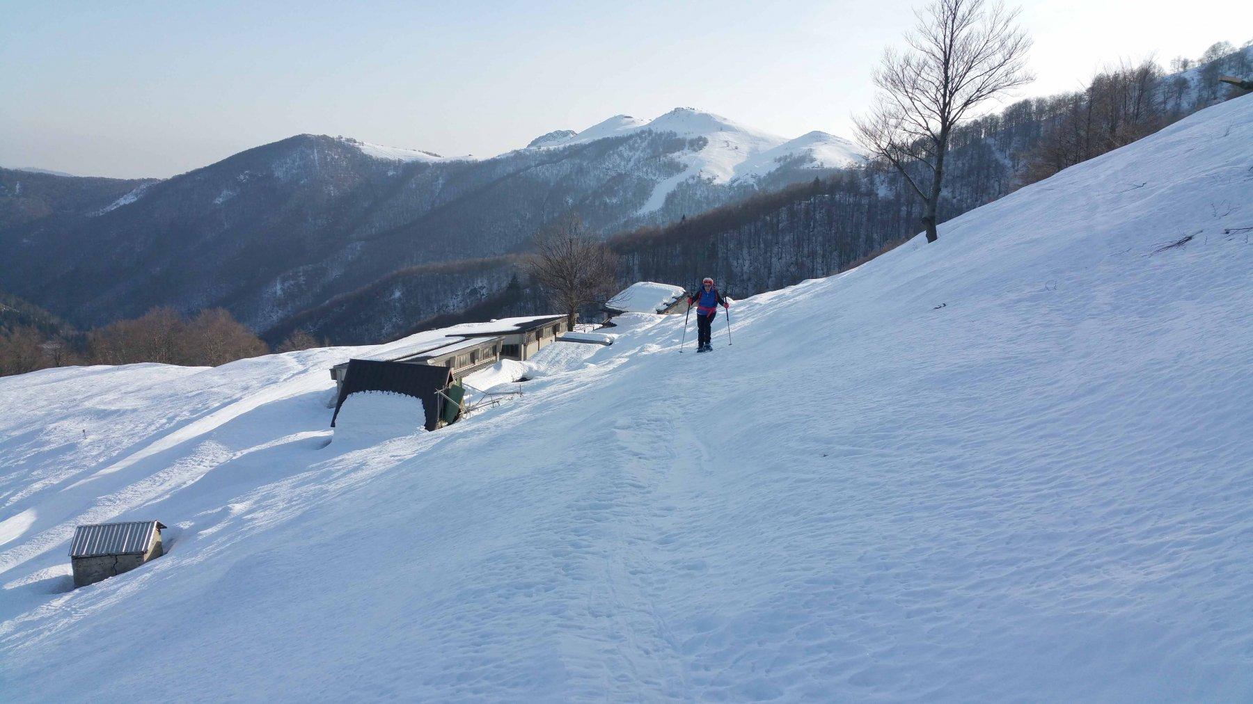 Alpe montuccia