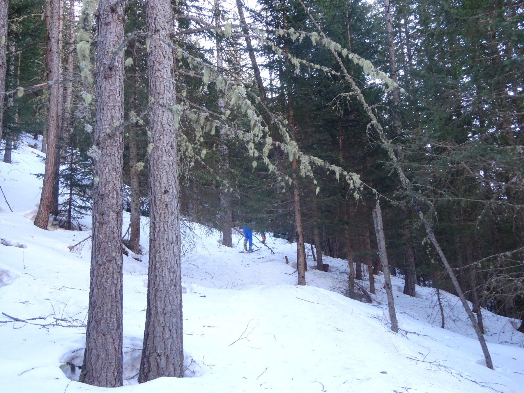Prima parte di salita nel bosco fitto