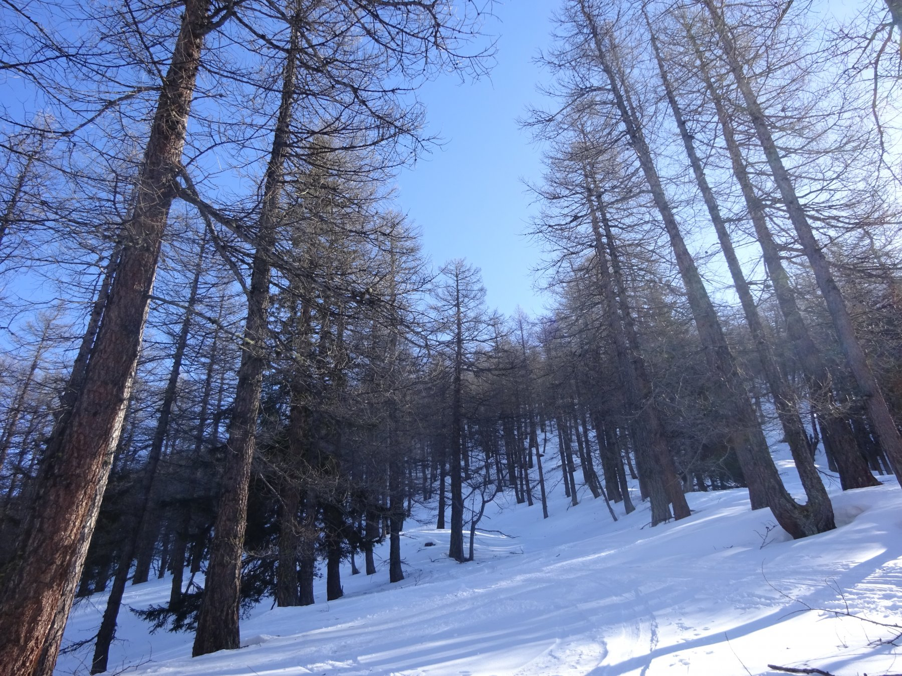 Dopo la Decauville il bosco comincia finalmente ad aprirsi