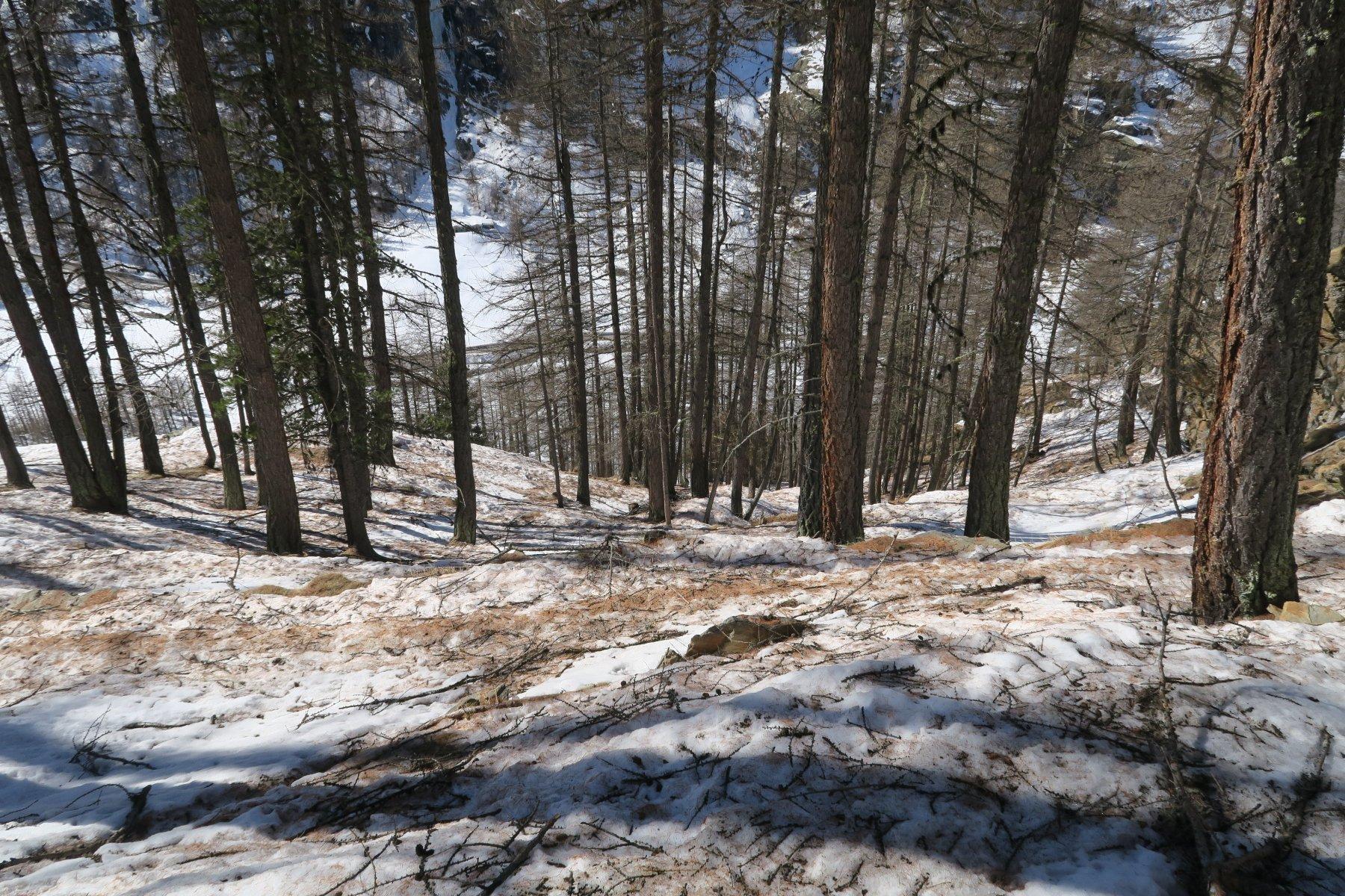 nel bosco tanti rami e rametti