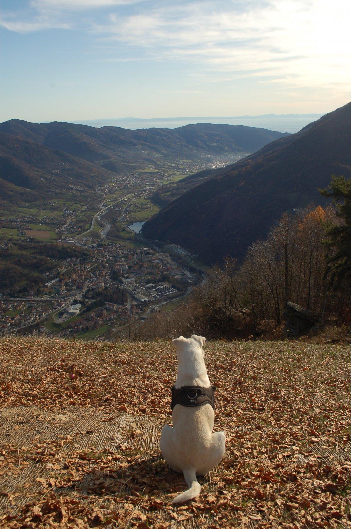 La bassa Val Chisone dalla cima