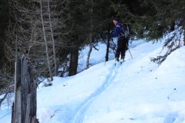 Nel ripido bosco   I   Dans la raide forêt   I   In the steep wood   I   Im steilen Wald   I   En el bosque empinado