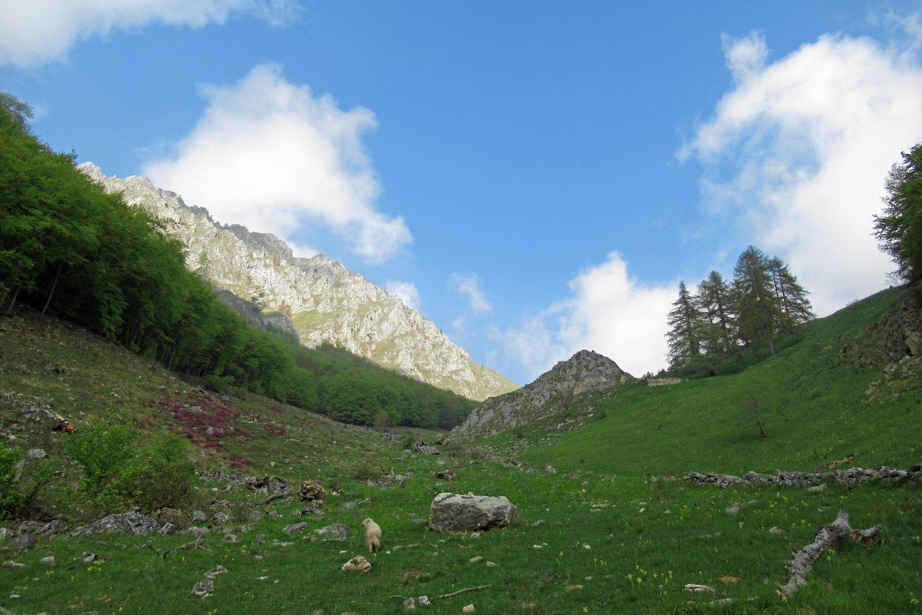 In salita nella parte superiore del vallone,sullo sfondo la Roccia Agnelliera.