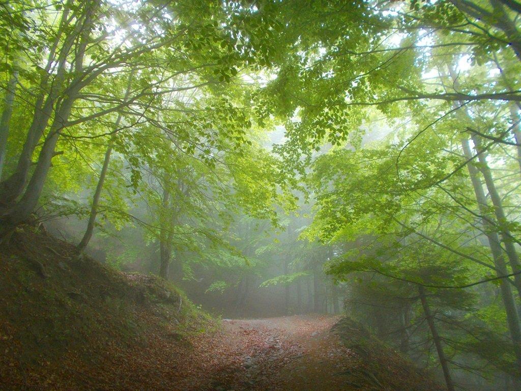 Il primo tratto del sentiero nel bosco