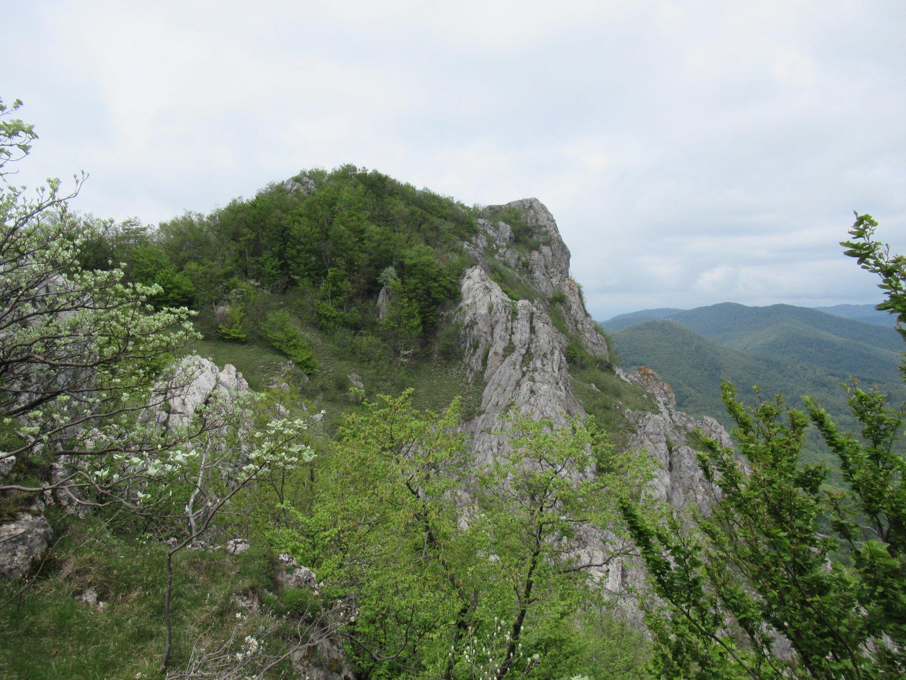 Rocca Barbena da sopra il Colletto Banco.