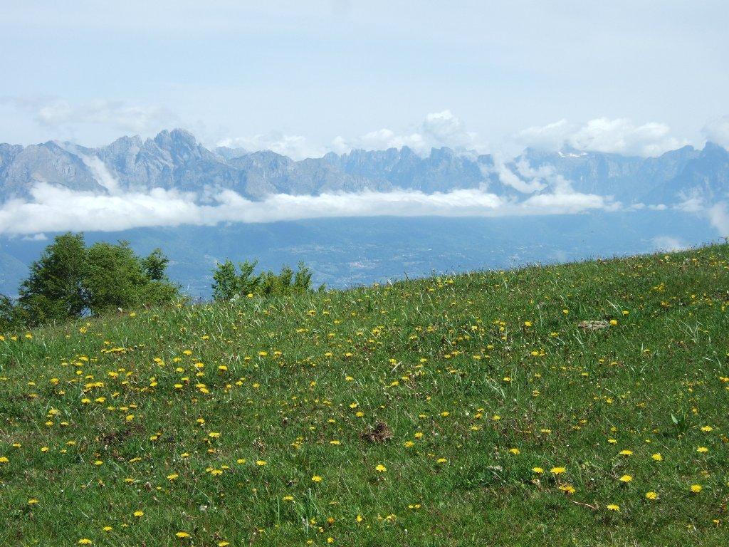 Dolomiti Bellunesi dalla dorsale del monte Zogo