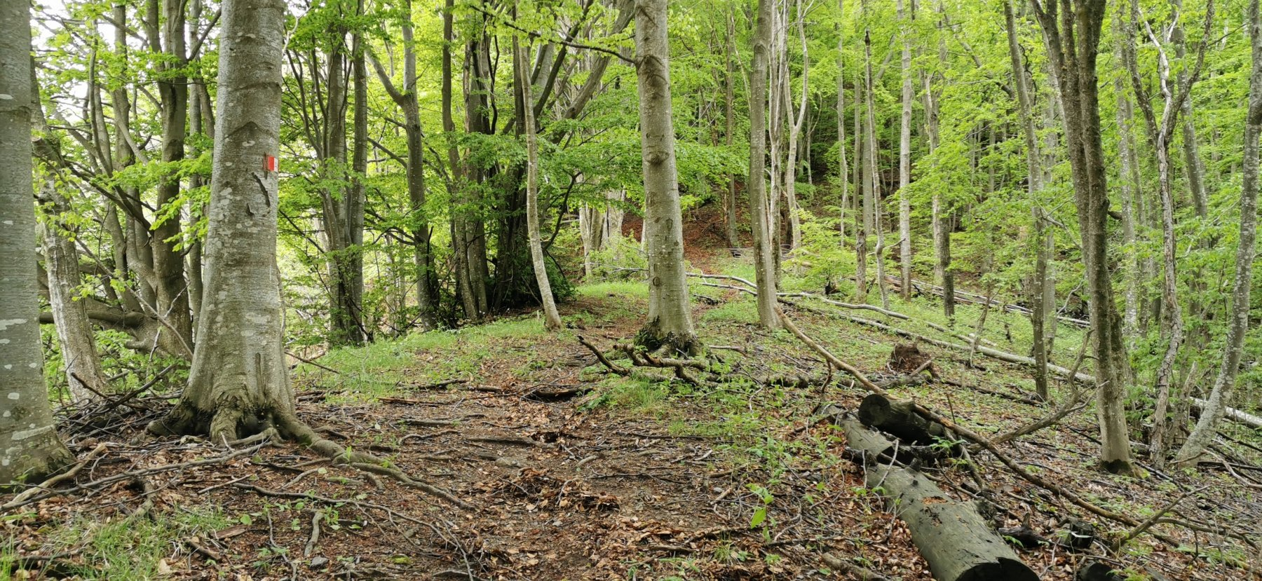 il sentiero sale inizialmente all'interno di un fitto bosco