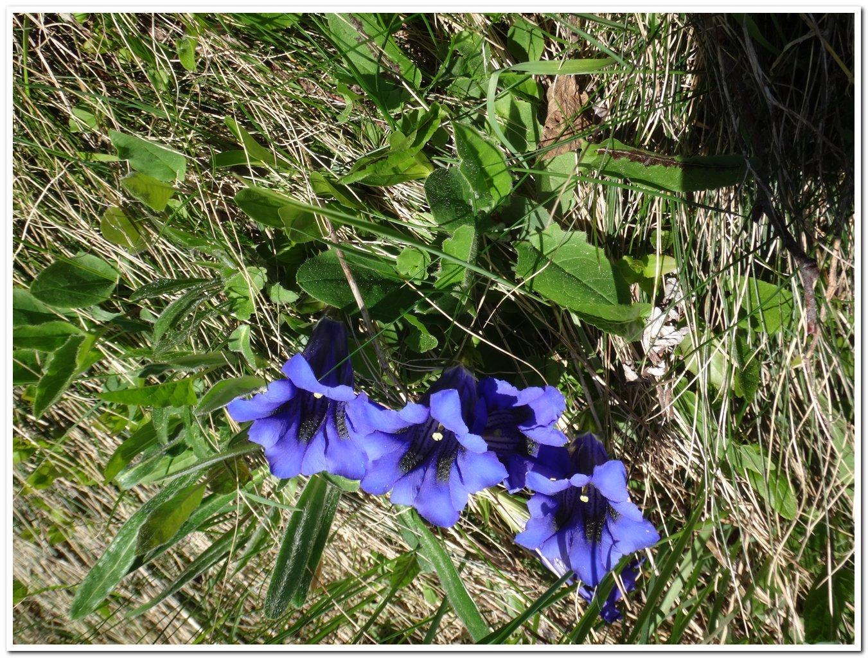 fioritura poco prima del colle