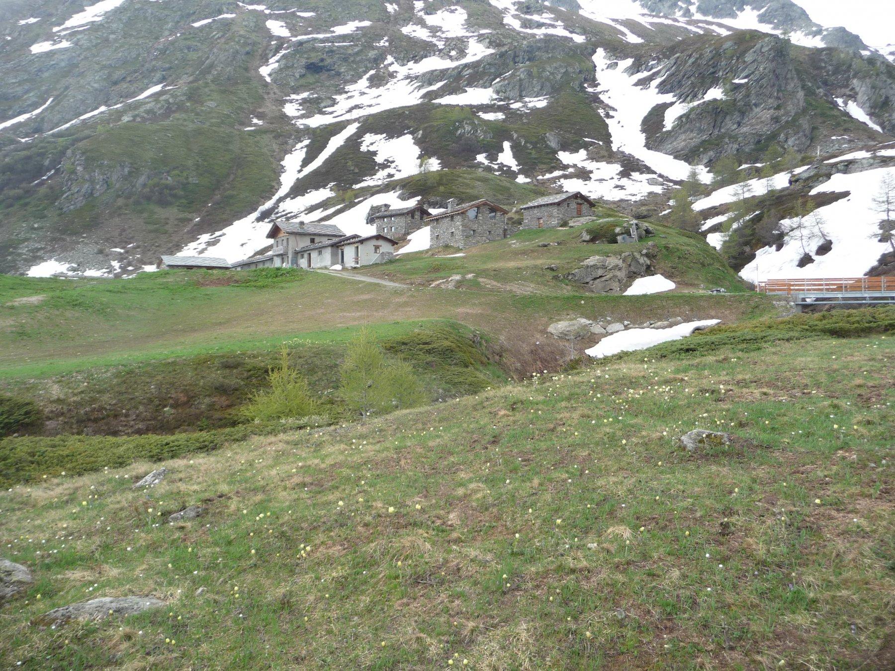 Alpe Monte Forciaz