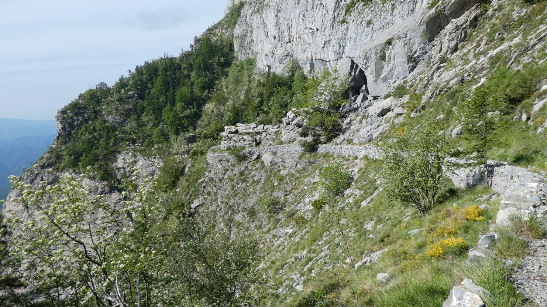 un tratto più facile del Sentiero degli Alpini